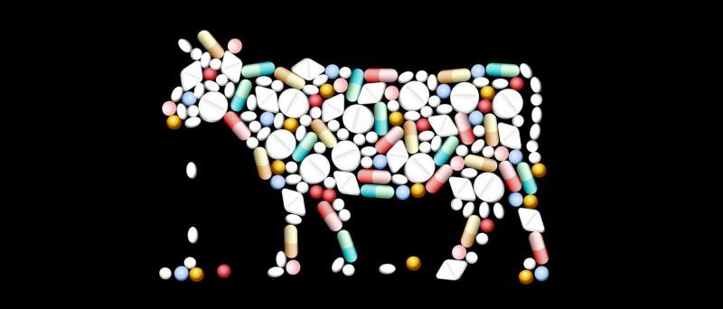 РФ будет добиваться сокращения использования антибиотиков в АПК