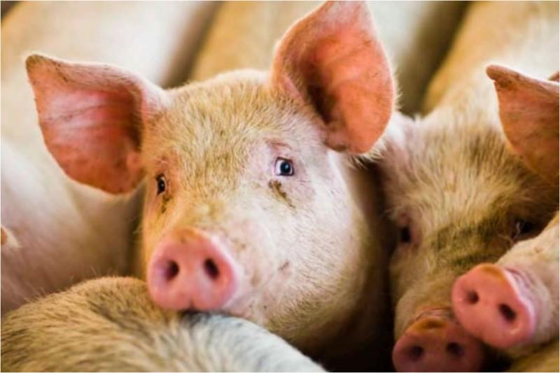 За прошлую неделю в мире зафиксировано 53 очага болезней животных