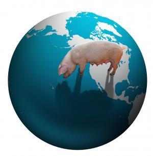 Краткий обзор мирового свиного рынка от МСХ США