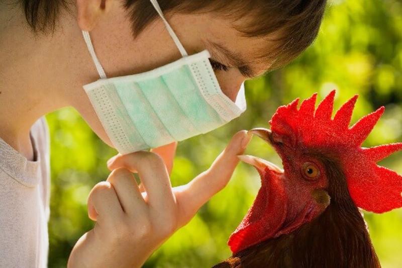 Роспотребнадзор усилил меры по профилактике птичьего гриппа в период ЧМ-2018