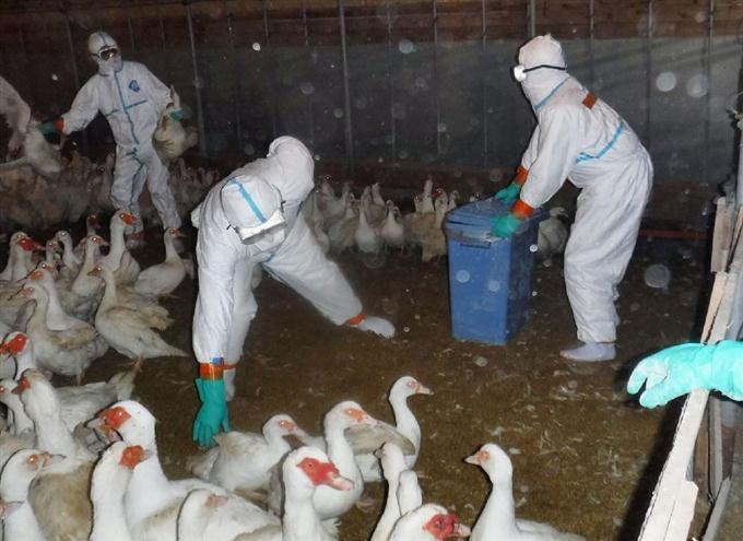 Птичий грипп на «Евродоне»