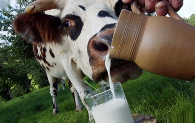 Ученые Ставрополья изучили опыт молочного животноводства в Сербии