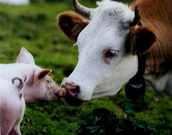 Воронежская область: животным назначили оздоровление