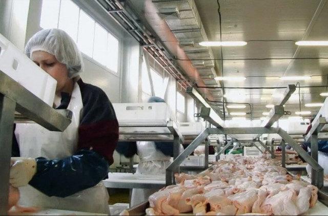 Ставропольский край: мясо птицы становится одной из основных статей экспорта