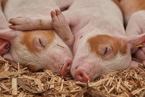 Для 94% европейцев важно благополучия сельскохозяйственных животных