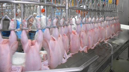 Ставропольский край: Невинномысский птицекомбинат опроверг наличие антибиотиков в своей продукции