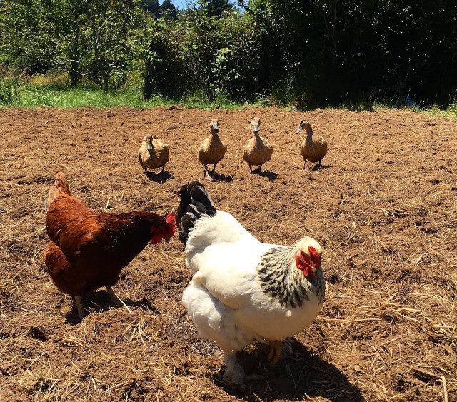 В Крыму стартовали курсы для начинающих фермеров