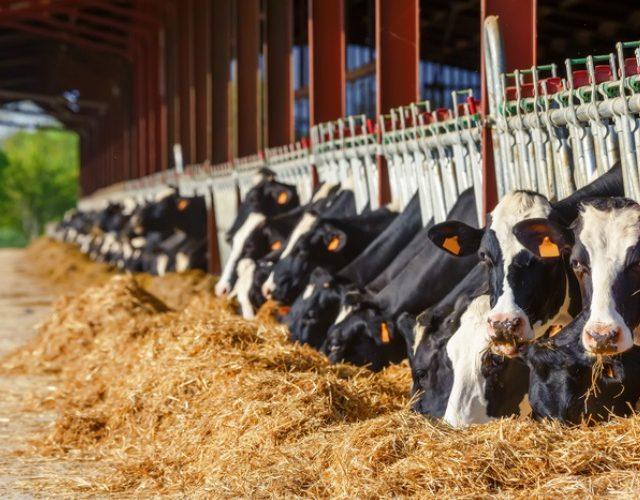 На Ставрополье на поддержку животноводства направят 645 млн рублей в 2021 году